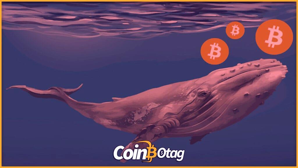 Bitcoin-balina-1024x576-1-freshblue