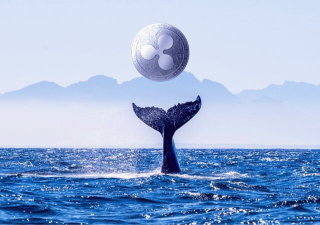 ripple-xrp-whale-scaled-1-freshblue